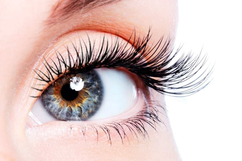 Random facts about eyelashes